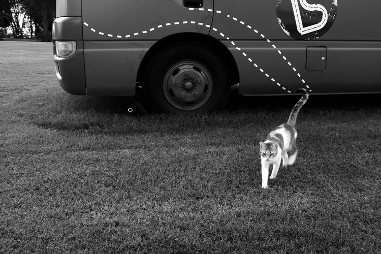 Cats Cats Of EyeEm Streetphotography Cat Pets Tire Dog Land Vehicle Low Section Car Stationary Animal Themes