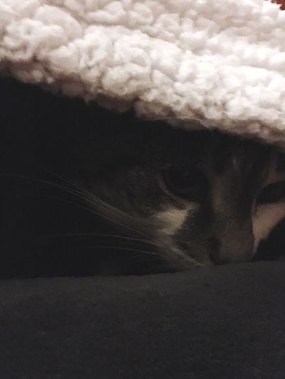 Cat Cute Cats Cute Pets Cute♡ Cutecats Cute Cat Peekaboo Peeking Peek A Boo Peekaboo! Peeking Out Keeping Warm