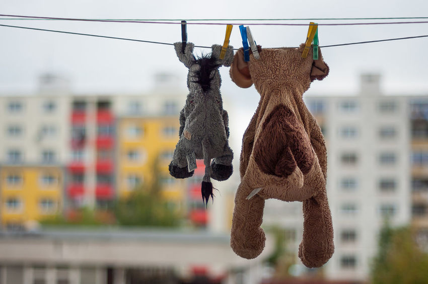 Humour Bad Luck Children Destiny Emotional Photography Kindergarten Maternity New Life Plush Washing Animal Themes Childhood Cleanup Close-up Clothesline Day Drying Emotional Focus On Foreground Friendship Hanging Laundering No People Stuffed Animal Two Friends EyeEmNewHere