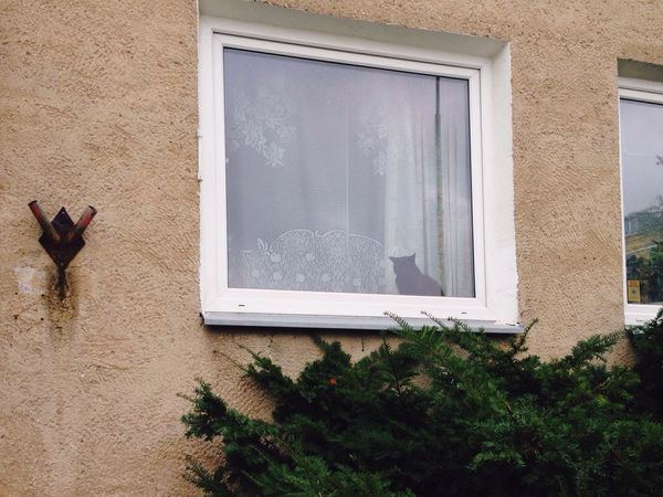 Black BLackCat Cat Streetphotography Street Street Photography City Cityscapes Hi! Autumn Architecture Home House Building Walking Around Window Reflection Alone