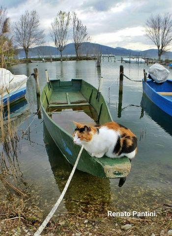 La mia Barca!! :) My Boat Gatto Gatti Cat Cats Catsofinstagram Lagotrasimeno Trasimeno Trasimenolake Umbria Samsung Galaxy S5 GalaxyS5 Olloclip Olloclip Wide Sanfeliciano