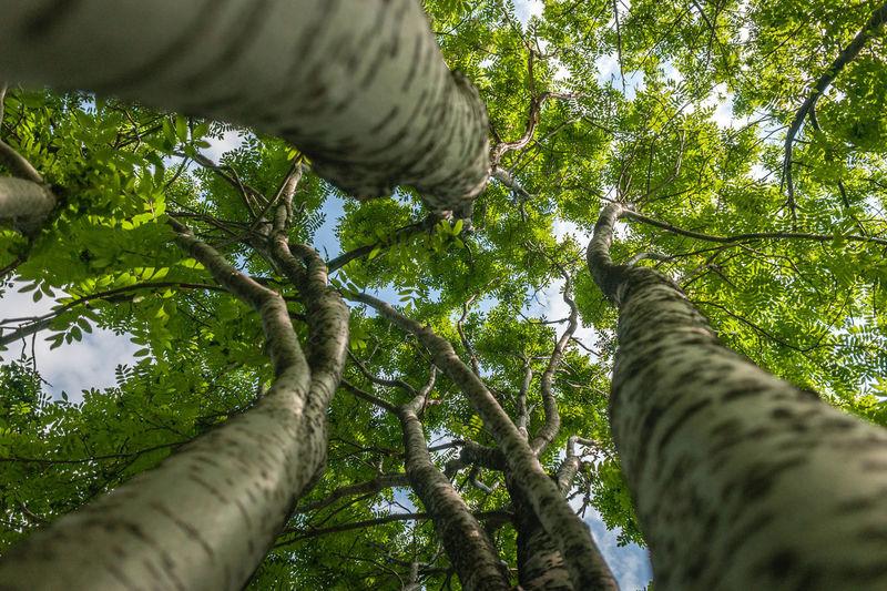 Trees Tree Shade Coma Upper Branches Novokuznetsk Kuzbass Siberia Russia