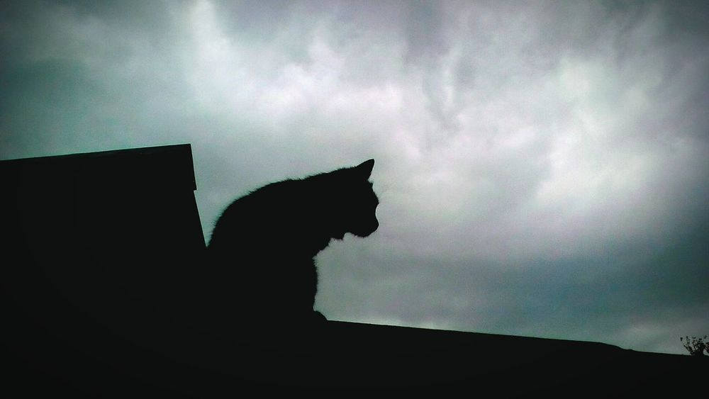 One Animal Cloud - Sky Silhouette No People Animal Themes Sky Outdoors Domestic Animals Cat Animal Roof Storm