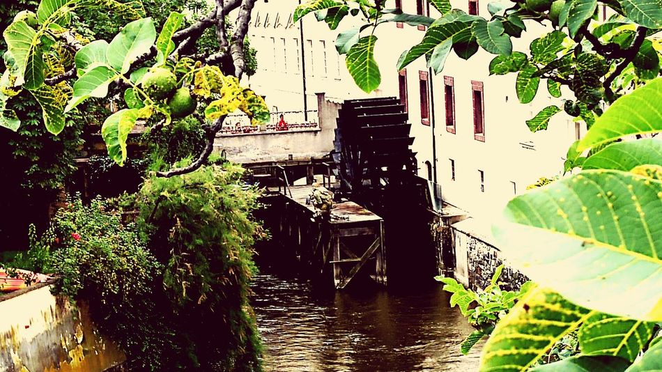 Kampa Prague Hanging Out Taking Photos Prague Praha Old City Travel Photography Architecture PhotographyPraha2016 Streetphotography Enjoying Life Old Buildings Water Mill Praha ❤️ Praha_life From My Point Of View Eyemphotography TreePorn Holidays