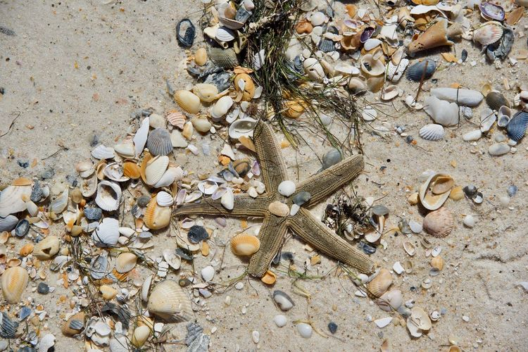 Exploring the beach of St. George Island, FL. Animal Bone Animal Themes Beach Beauty In Nature Close-up Day Large Group Of Objects Nature No People Ocean Outdoors Pebble Sand Sea Seashell Selfie Starfish  Water
