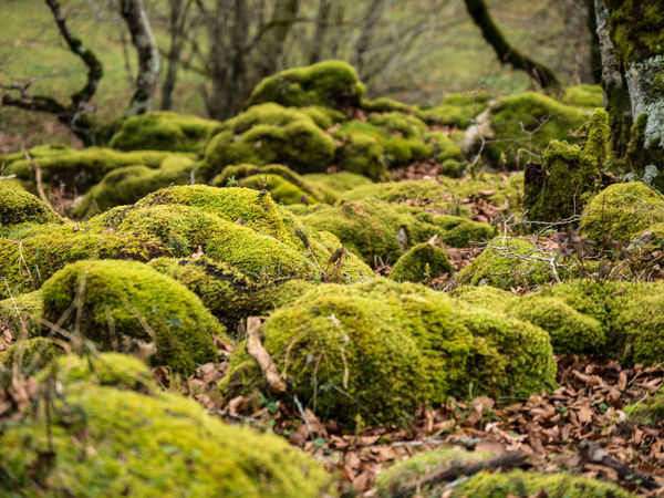 Beauty In Nature Moss Rocks And Moss