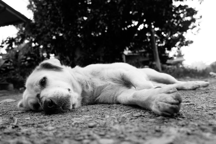 Portrait of a dog sleeping