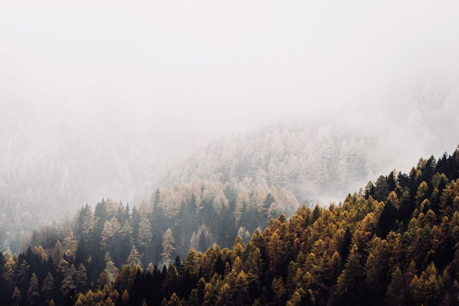 Winter is coming Be. Ready. Tree Fog Nature Forest Beauty In Nature Mountain Scenics Tranquil Scene Weather Tranquility WoodLand Pine Tree Landscape No People Growth Day Outdoors Cold Temperature Winter Wilderness Area