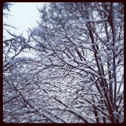 Hello Snow !