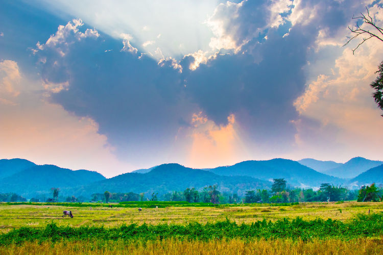 Cloud - Sky Sky Beauty In Nature Landscape Scenics - Nature Environment Land Green Color Grass Mountain Range Mountain Non-urban Scene Outdoors Nature Tranquility Rural Scene No People Tranquil Scene Plant Field Agriculture
