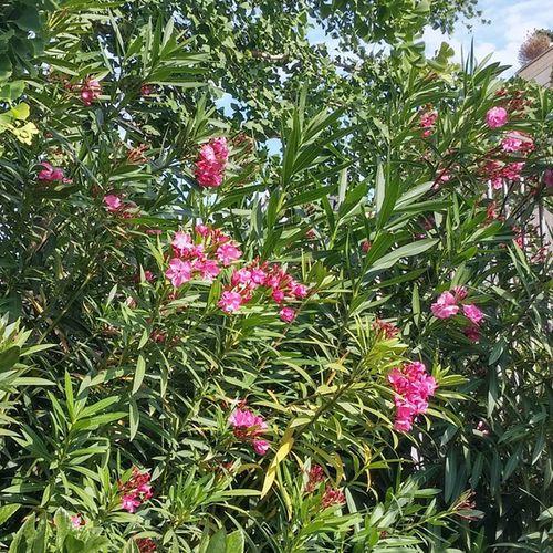 Turopark Park Parque  Puisto Flowers Flores Kukkia Barcelona Bcnexploradores Bcnexplorers Thebarcelonist
