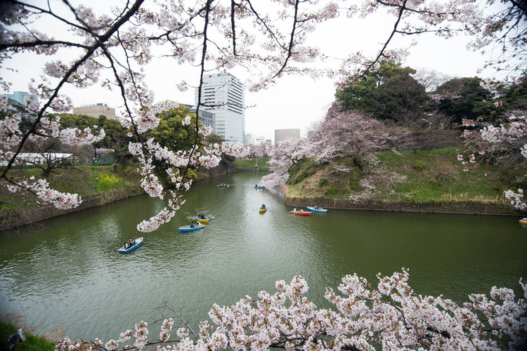 spring flowers cherry blossom Japan Cherry Blossom Japan Japan Photography Japanese Garden Spring Flowers Sun Beatiful Day.. Architecture Beauty In Nature Building Exterior Built Structure City Day Flower Growth Nature Nautical Vessel Outdoors Real People River Sakura Blossom Sky Spring Flowers Spring Flowers April Travel Destinations Tree Water