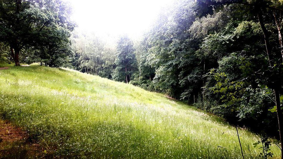 Ein märchenhafter Märchenwald First Eyeem Photo Forest Photography Forestwalk Forest Märchenwald Grünanlagen Gegenlicht Hamburg Grüne Stadt Wanderweg Fahrradtour