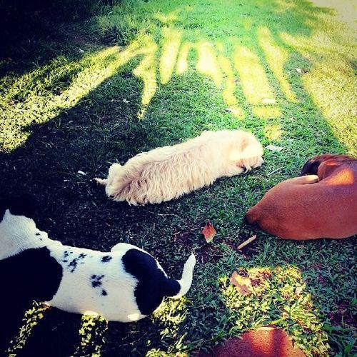 Triagle Friendsdogs Dogs Green Shadows amizade mais verdadeira que pode se existir!