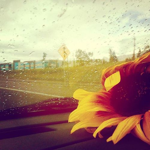 Brighter days are yet to come Happiness BrighterDays Joy Sunflower Rain Prairielife HASHTAG