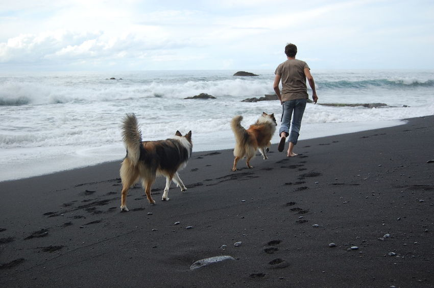 Adult Beach Beauty In Nature Bonding Dog Domestic Animals Friendship Full Length Leisure Activity Lifestyles Loyalty Mammal Nature One Animal Outdoors People Pet Owner Pets Real People Sand Scenics Sea Togetherness Two People Wet