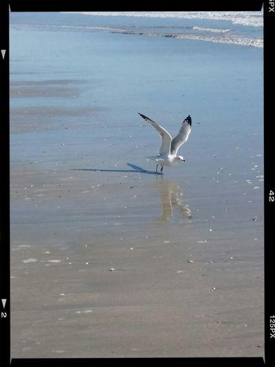 Nature Seagull