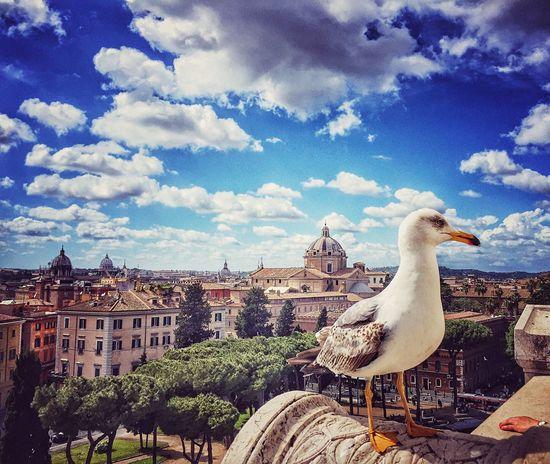 Roma Altaredellapatria Gabbiano Sky Sunny Sunnyday Love Beautiful Beauty In Nature