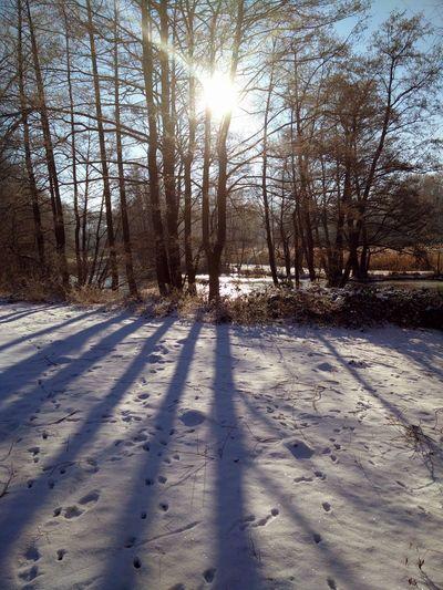 Winter Spreewald Winter Sun Winter Trees Winter Landscape