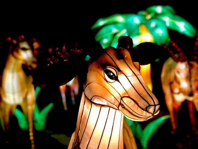 Animal Illuminated Night Close-up No People Sculpture Outdoors