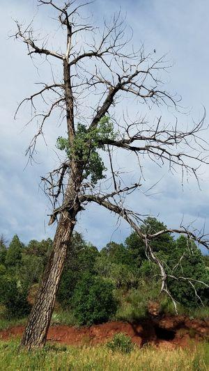 Tree Nature Day Outdoors Lone Bird