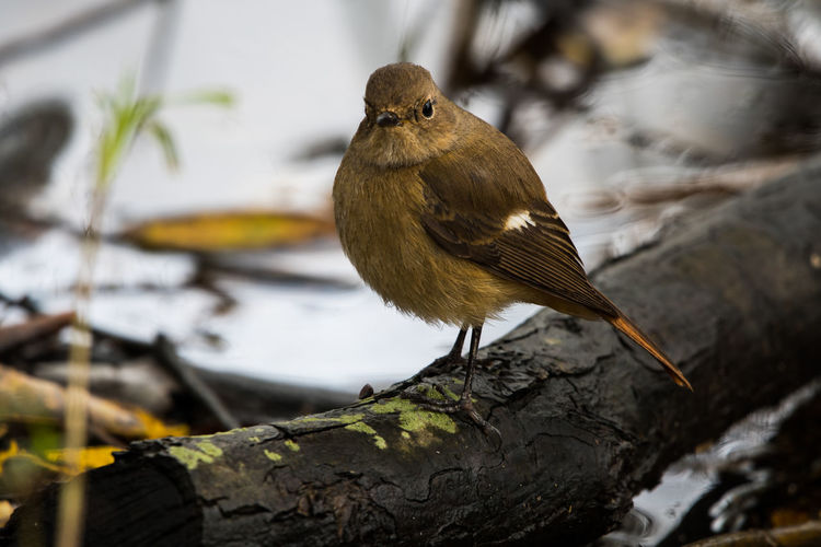 brown bird One Animal Animal Themes Bird Animal Animal Wildlife Vertebrate Animals In The Wild Perching Focus On Foreground Water Nature Day No People Close-up Outdoors Wood - Material Plant Branch Tree
