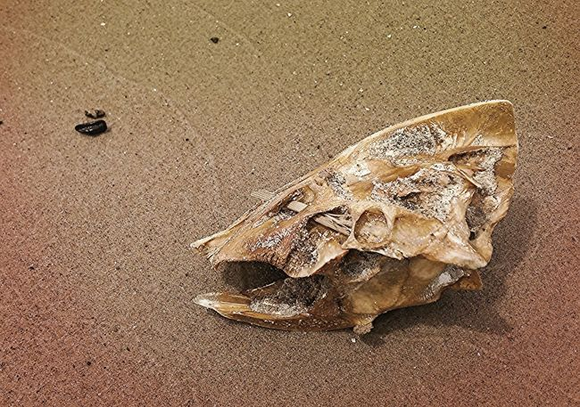 Lake Erie Michigan Beach Fish Bones