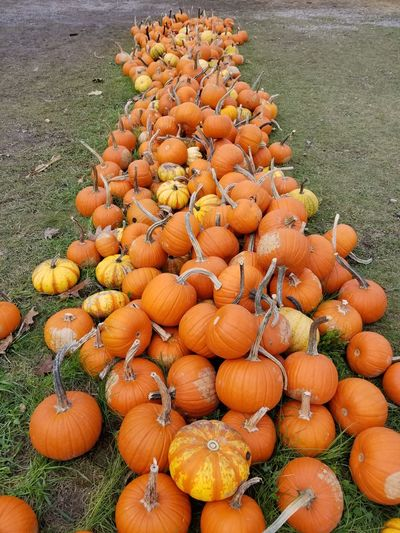 pumpkins and gourds Gourds & Pumpkins EyeEm Selects Pumpkin Vegetable High Angle View Orange Color Grass Close-up Food And Drink