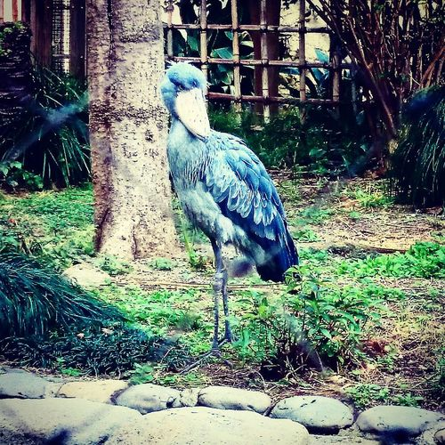 One Animal Bird Zoology Nature Zoo Beauty In Nature Green Color