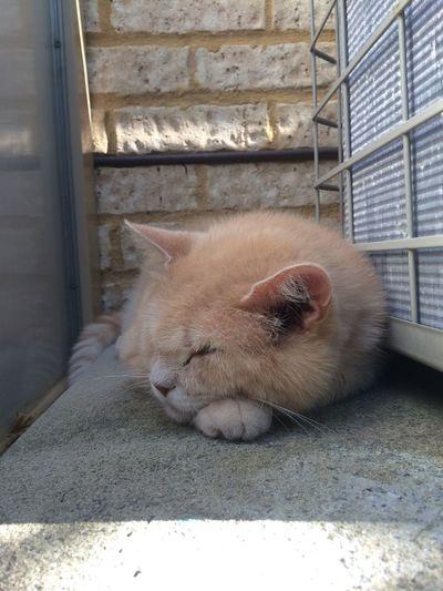 Relaxing Outdoors Sleeping Cat Thats My Boy