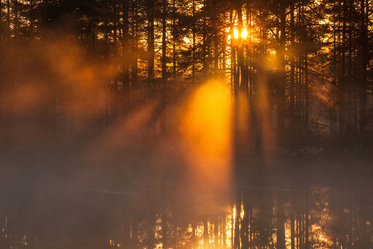 Sun shines through the forest a misty morning