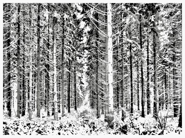 Hochwald Hundsrück Germany Forest Tree Nature Cold Temperature Winter Tree Trunk No People Beauty In Nature Snow Day Tranquility Outdoors Growth Scenics Shades Of Winter