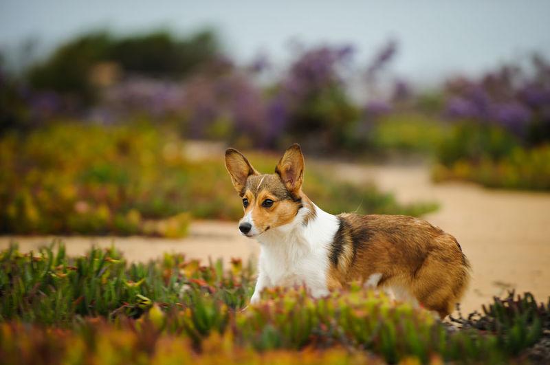 View of dog in garden