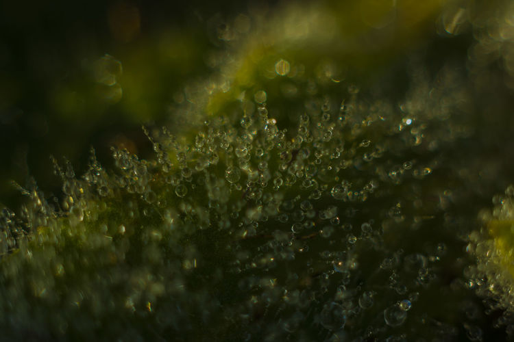 Close-up of wet plants