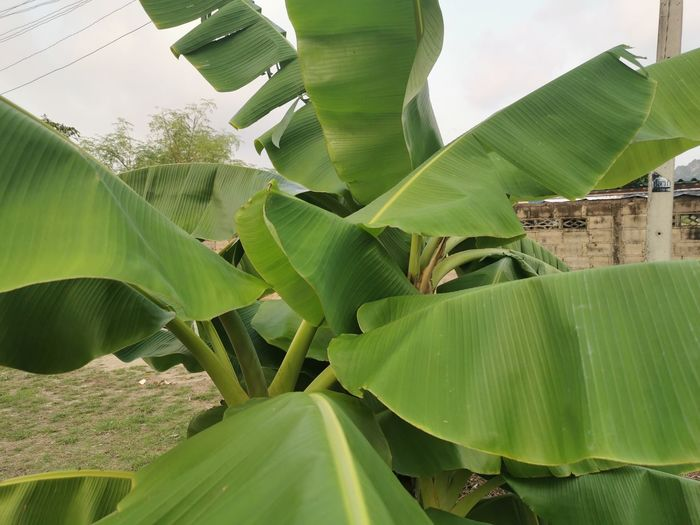 Low angle view of green leaves on plant