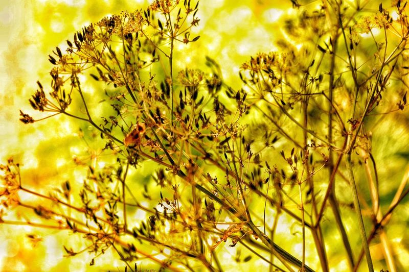 Yellow Gold Fresh On Eyeem  Nature Brushwood Sunny Day Hazy  Gold Glow Yellow Glow Mother Nature 43 Golden Moments Mellow Yellow They Call Me Mellow Yellow D'or Golden Hour Bright Sunny Sunday New Gold Dream Golden Light Golden Afternoon Golden Color Palette Colour Of Life