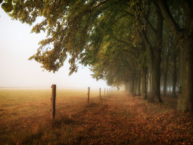 Autumn Beauty In Nature Day EyeEmNewHere Grass Growth In A Row Landscape Nature No People Outdoors Scenics Tranquil Scene Tranquility Tree