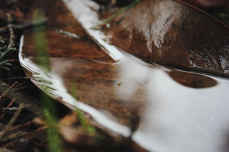 Scenics Beauty In Nature Fragility Water Backgrounds Vscocam Leaf Selective Focus Close-up No People Nature Day Outdoors VSCO Nature Landscape Scène Tranquille Cold Temperature