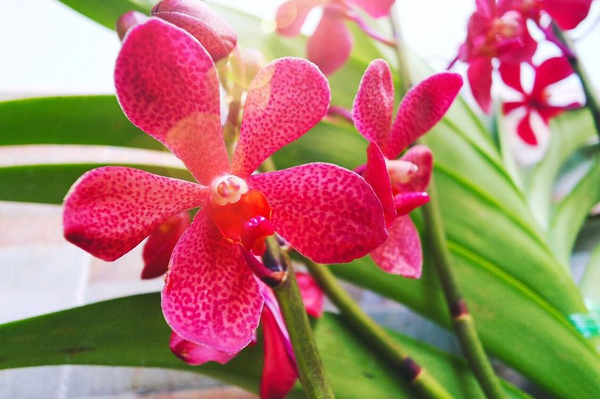 Flower Flowers Orchid Sunny Day Sunshine