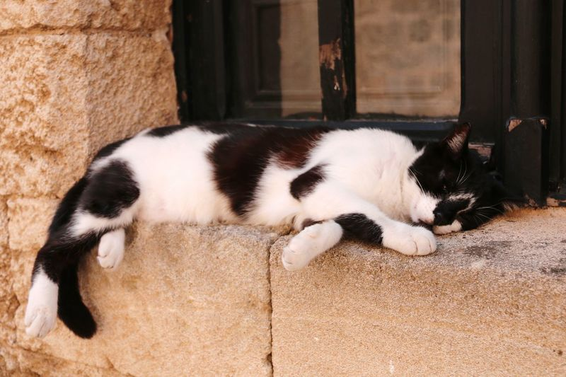 Siesta time Cat Siesta Time Siesta Domestic Cat Animal Themes Ledge Resting Laziness Summer Sunny Day Relaxation Whisker Street Photography Street Photo Summertime Taking Picture Enjoy The New Normal Adapted To The City Pet Portraits Be. Ready.
