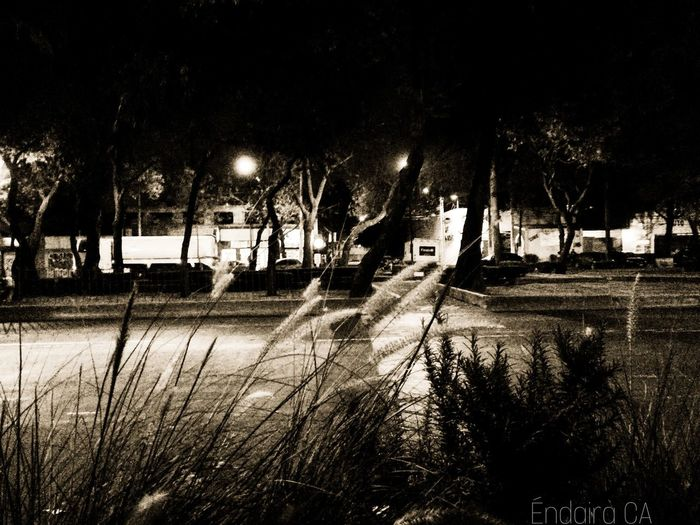 Night Nature Taking Pictures Mexico Nigthlight Nightshot Night Life No People
