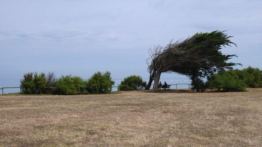 Phare de Chassiron Wind Trees Oleron France Tree TreePorn Treescollection