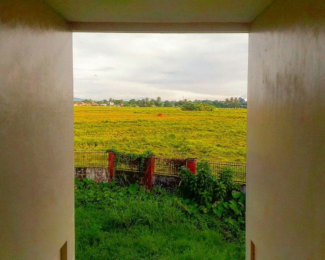 View point Rice Field Ricefield View View Architecture Built Structure Nature Building Exterior Viewpoint No People