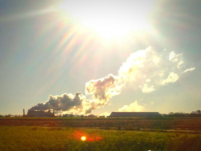 Louisiana Mornings Fall_collection Fall Season Changing Seasons Eye Of Ky Louisiana Sugarmill Louisianaphotography Louisiana Skies Farmland Mill During the fall in Louisiana our farmers are hard at work cutting fields and fields of sugarcane, starting early in the dark mornings! Its many different steps to the process. ..one important step is the hauling of the cane off to the sugarmill to be processed ! This is one of our local sugar mill fired up early one morning! This is not only a beautiful morning, but it's a part of a beautiful fall season here in South Louisiana !