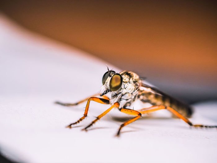 Close-up of mosquito on paper