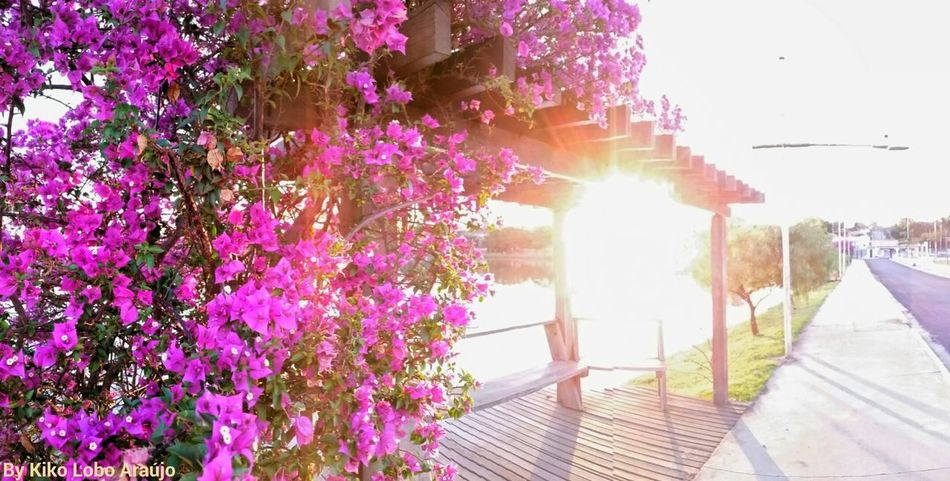 Flores De Primavera Parque Do Balneário Termas De Ibirá Lagos Turismo