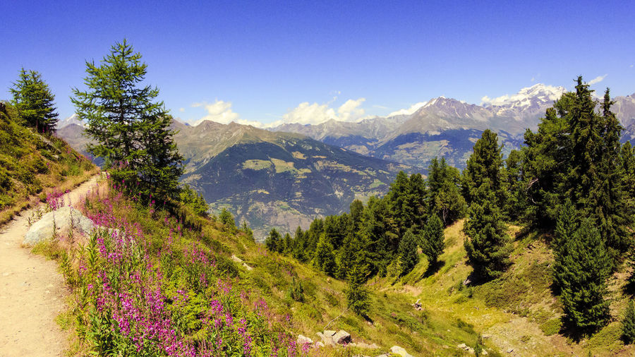 Summer in mountain Alps Colors Of Nature Forest Hanging Out Landscapes Mountain View Mountains Nature_collection Nobody Outdoors Photography Path In Nature Scenic View Sunshine Travel Destinations Trees Trekking Valley Vitality Color Walking Alone... Wildflowers In Bloom WoodLand