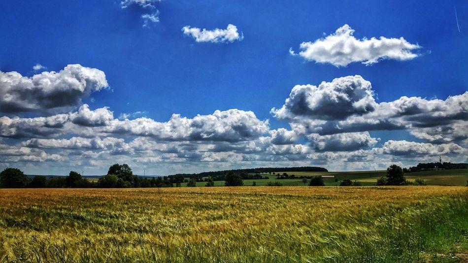 Field Agriculture Sky Beauty In Nature Nature Landscape Cloud - Sky Tranquility Tranquil Scene No People Growth Scenics Day Rural Scene Blue Outdoors