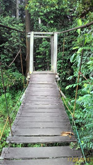 Bridge Wooden Bridge In Forest The Way Forward Day No People Outdoors Growth Plant Nature