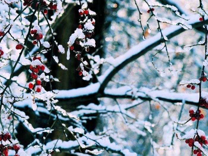 Cherries on tree during winter